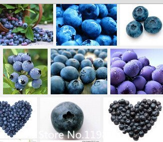 100seeds Promotion / sac Blueberry graines Bonsai graines de fruits comestibles, Indoor, Outdoor Seed Novel Disponible