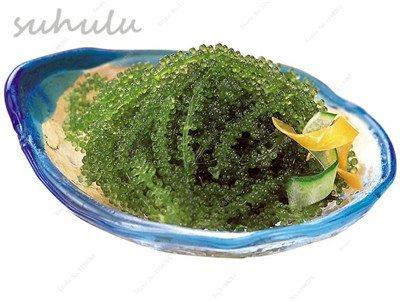 10 pièces rares Graines Seagrapes, semences avancée fruits, raisins croissance naturelle dans l'eau délicieux très difficile à trouver non Ogm savoureux spécial 14