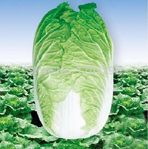 Automne précoce chinois graines de chou légumes graines - 100 pcs / lot