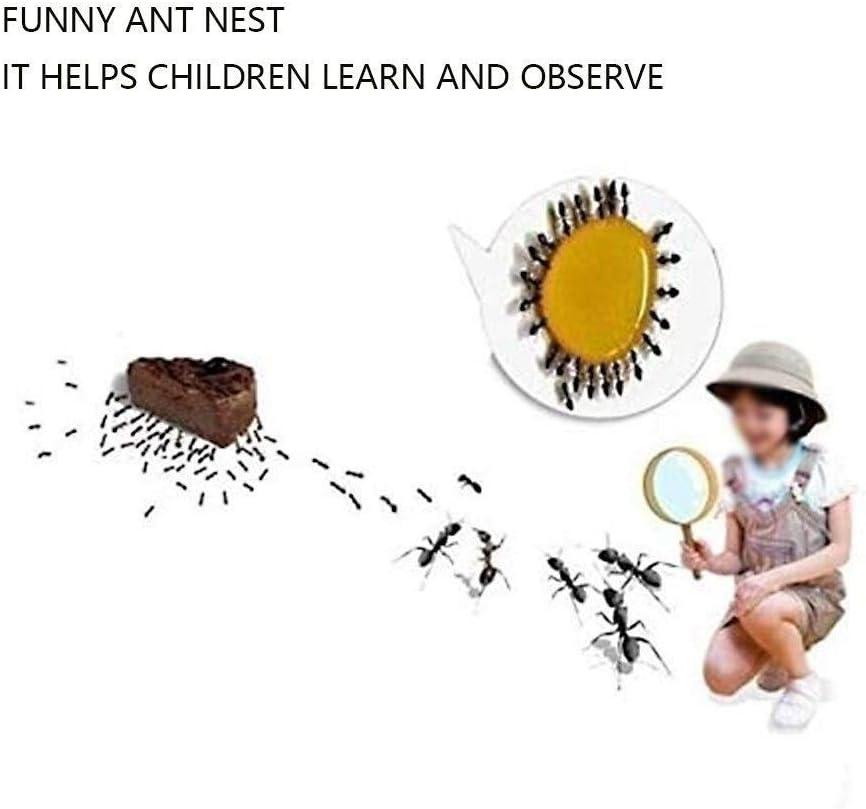 Ant Farm Nest Klein DIY Acryl Transparant Ant Castle Villa Huis Formicarium Moisturizing Watertoren Lair For Het Voeden Van VerjaardagsgeschenkGift (Color : O) K