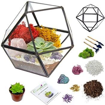 terrarium kit for adults
