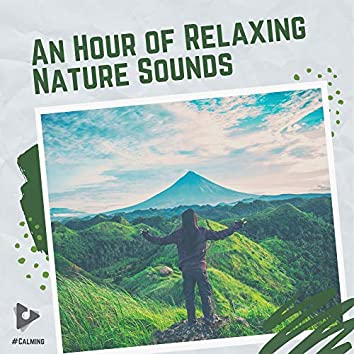 An Hour of Relaxing Nature Sounds