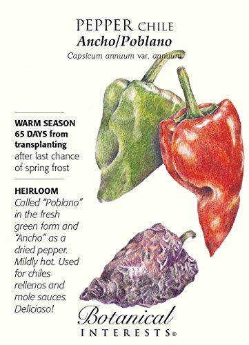 Ancho/Poblano Chile Pepper - 30 Samen - Heirloom