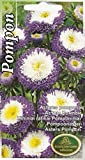 AGROBITS Flowes Aster n Cut Coupe Literie Jardin Pictorial Paquet Purpl