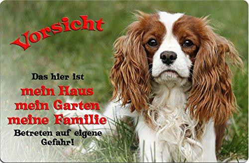 +++ CAVALIER KING CHARLES Spaniel - Metall WARNSCHILD Schild Hundeschild Sign - CKC 11 T1