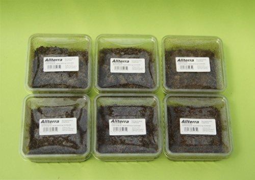 Allterra Tropische Springschwänze 6 Dosen, Collembola in 500 ml Dose, Zuchtansatz