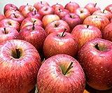 【長野県産】訳あり つがるりんご 大きさお任せ 約5kg