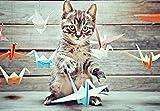 """5D DIY diamante pintura bordado dibujo-gatito gato gato Tableros de animales de Origami-40 * 50 CM Regalo de costura Mosaico de diamantes completo Punto de cruz Decoración para el hogar"""""""