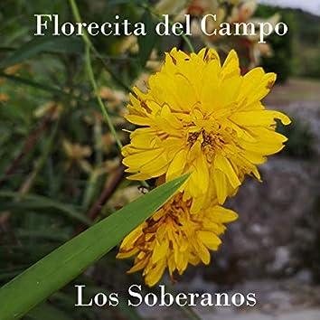 Florecita del Campo