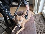 PetBrush Fellbürste für den Staubsauger – Schonende Fellpflege für Hunde & Katzen - 4