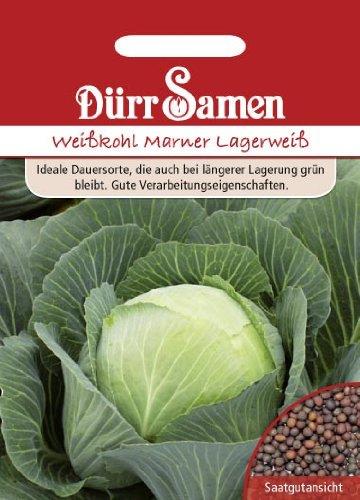 Dürr-Samen Weißkohl Marner Lagerweiss