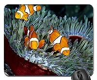 3つのオレンジ色の熱帯魚とサンゴラバーコンピューターマウスパッドマット