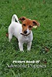 Picture Book Of Adorable Puppies: A Gift Book For Alzheimer's Patients And Seniors with Dementia: 6 Inches By 9 Inches 39 Pictures (Dementia Books mcj) (English Edition)