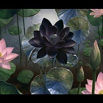 Black Lotus Blooms