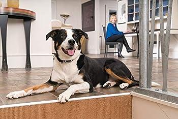 PetSafe - Collier Récepteur de Dressage pour Chien supplémentaire, Rechargeable, Etanche, Son/Vibration / Stimulation électrostatique (15 niveaux) pour Chien de 3.6 kg et plus
