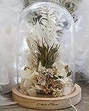 Composition de Fleurs séchées sous Cloche. Blanc. Fait Main dans Un Atelier de création Floral français