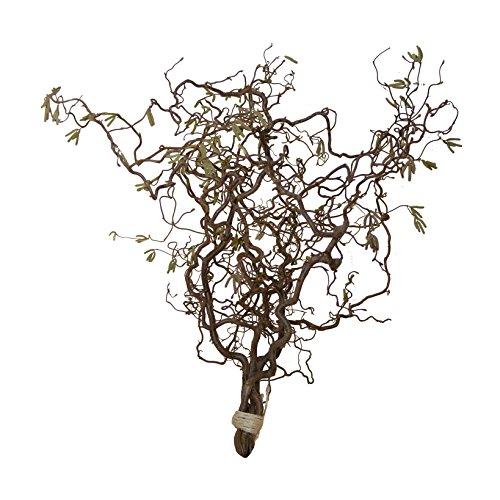 Korkenzieherhasel - Bündel (5 Zweige je gewählter Länge) Echte Dekoäste Osterstrauß Oster-Tischdeko - Frühlingszweige - Frühlingsdeko für die Vase oder hängen - Fensterdekoration, Size_Name:80 cm