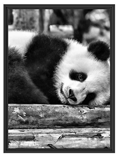 Schattige kleine pandabeer in schaduwvoeg fotolijst | kunstdruk op hoogwaardig galeriekarton | hoogwaardige canvasfoto alternatief 80x60