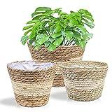 3 Pezzi cestini per vasi di fiori di alghe Cestini portaoggetti intrecciati a mano cestino di stoccaggio fioriere per interno esterno decorazione