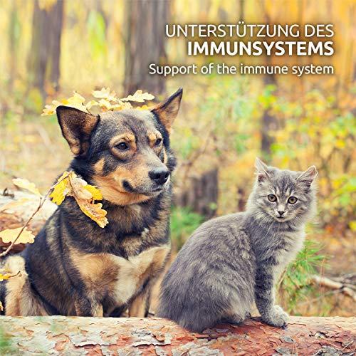 AniForte Natürliches Multivitamin 100g – Naturprodukt für Hunde und Katzen - 4