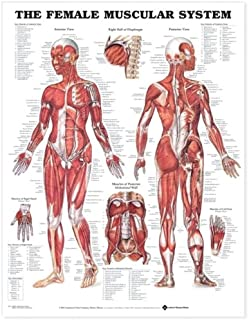 The Female Muscular System Anatomical Chart (9781587795657)