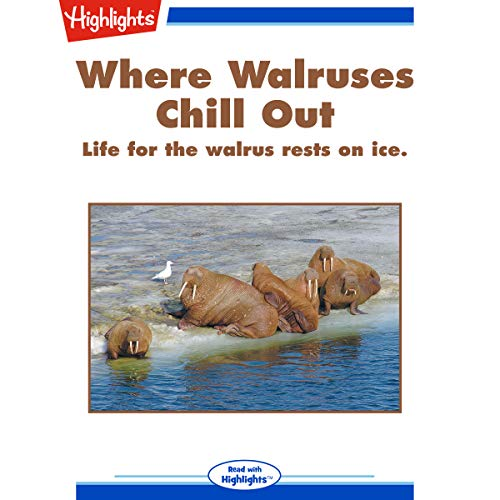Where Walruses Chill Out copertina