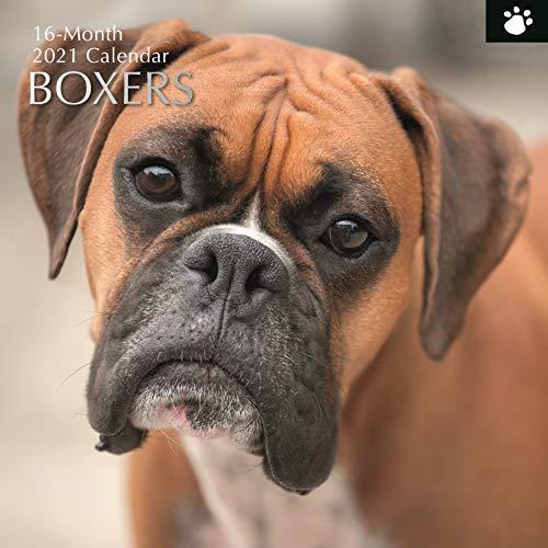 2021 Wandkalender - Boxer Kalender, 30 x 30 Zentimeter Monatsansicht, 16-Monat, Hunde und Haustiere Thema, Enthält 180 Aufkleber auf Englisch