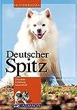 Deutscher Spitz: Charakter, Erziehung, Gesundheit
