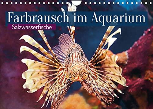 Farbrausch im Aquarium: Salzwasserfische (Wandkalender 2022 DIN A4 quer)