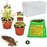 Exotenherz - Fleischfressende Pflanzen - Aquarium zum Selberpflanzen - klein