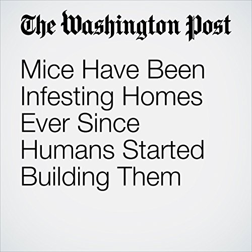 Mice Have Been Infesting Homes Ever Since Humans Started Building Them copertina
