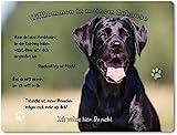 Warnschild - Aluminium - 20x30cm - Schwarzer Labrador Porträt thumbnail