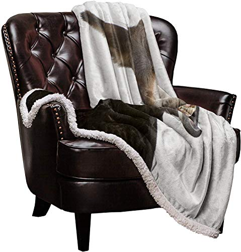 Roses Garden SuperSoftShaggySherpaWarmThrowBlankets FUUNY Donkey Animal Provide Fuzzy, Cozy Luxury Blanket Perfect Throw for Bed/Couch/Sofa (40'x50')
