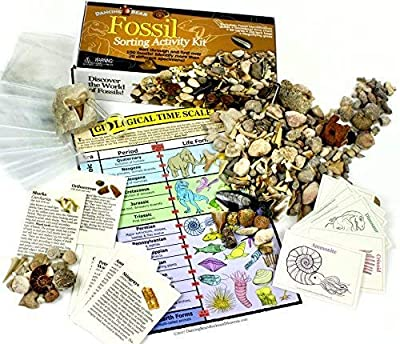 Dancing Bear Fossil Collection Sorting Activity Kit with Over 100 Pcs (More Than 20 Different Fossil Varieties!), Educational ID Sheet, Color ID Cards, Bags, Magnifying Glass, and Shark Teeth, Brand