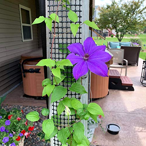 Scroll Trellis Garden Trellis for Narrow Spaces, Deck Posts, Fence Posts, Customizable for Wall and...