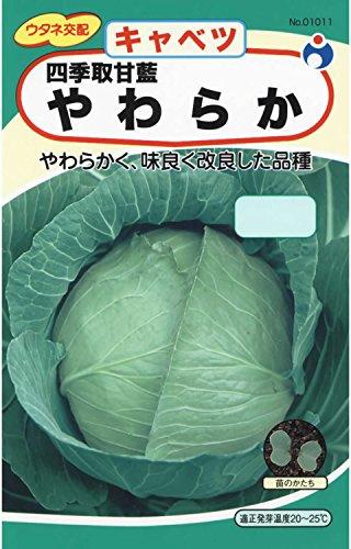 ウタネ交配 四季取甘藍やわらか キャベツ種子