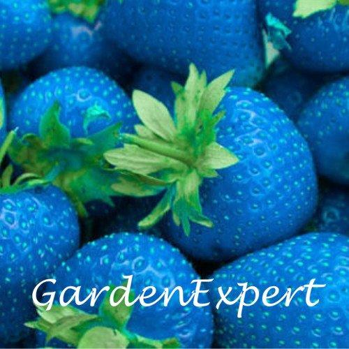 100pcs Rare Blue Strawberry Graines rares fruits Graines potagères en pot Fraise Bonsai usine jardin Livraison gratuite