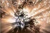 Posterlounge Leinwandbild 130 x 90 cm: Nebel und