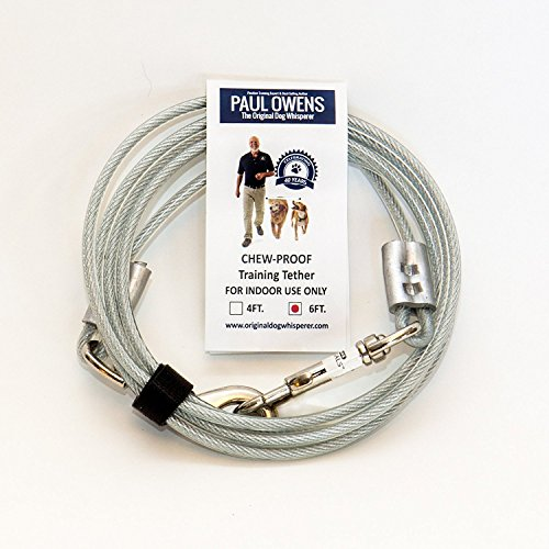 Paul Owens, The Original Dog Whisperer 6 Ft. Chew-Proof Training Tether for Dogs & Puppies