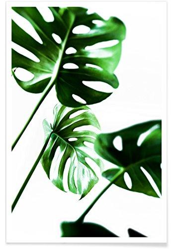 """JUNIQE® Blätter & Pflanzen Poster 20x30cm - Design """"Monstera 4"""" entworfen von Mareike Böhmer"""