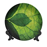 SfeatrutMAT 8' Green Dinner Plate,Nature Forest Big Amazon Brazilian Tree Leaf with Vein and Sunbeams Image Ceramic Tableware Plate for Dining Table Tabletop Home Decor Olive and Dark Green