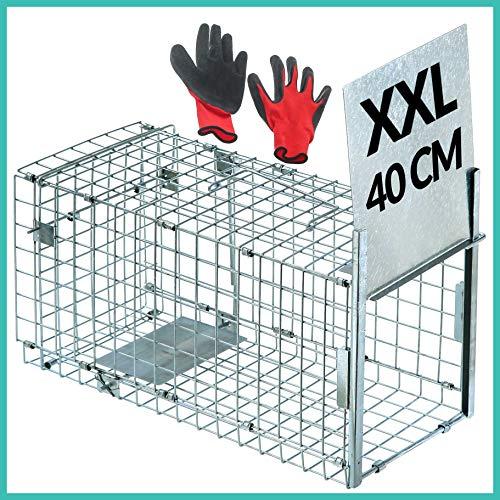 Praknu Rattenfalle Lebendfalle Groß 40cm XXL - Effektiv und Robust - Für Ratten, Mäuse