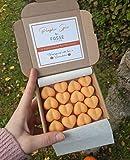 Fosse Living Pumpkin Spice - Cera de soja altamente perfumada, vegana, sin plástico y de larga duración, 16 unidades