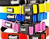 Dexil Elite Range Luxury Neoprene Padded Extra Strong Adjustable Large-XXL Pet Dog Collar (Sunburst Yellow, Large-XL 38-64cm x 30mm)