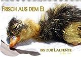 Frisch aus dem Ei bis zur Laufente (PosterbuchDIN A2 quer)