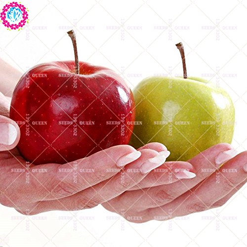11.11 grande promotion! 30 pcs/lot graines arbre géant fruit jus rouge jardin vert graine et maison plante herbacée vivace organique aweet