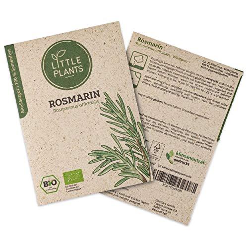 Little Plants BIO-Rosmarinsamen (Rosmarinus officinalis) Wildform | BIO-Kräutersamen | Nachhaltige Verpackung aus Graspapier | Kräuter-Samen | BIO-Saatgut für ca. 20 Rosmarin-Pflanzen