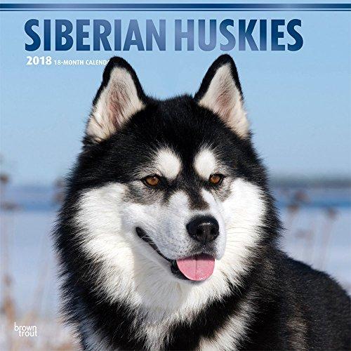 Siberian Huskies - Sibirische Huskies 2018 - 18-Monatskalender mit freier DogDays-App: Original BrownTrout-Kalender [Mehrsprachig] [Kalender] (Wall-Kalender)