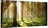 Set of 3 Green Canvas Art Wall Pictures Trees Landscape Print 3042 by Wallfillers
