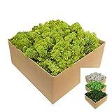Islandmoos - Moos in 1kg / 500g / 200g, versch. Farben - Echtes konserviertes Natur-Moos (Island) zum Basteln, Dekomoos für die Deko zu Ostern, Modellbau (hellgrün, 1kg)